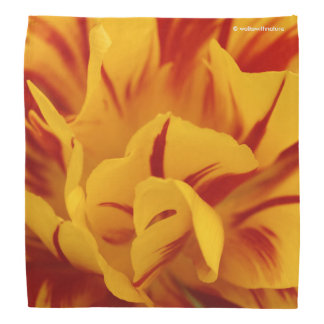 A Chaos of Red and Yellow: Triandrus Daffodils Bandanas