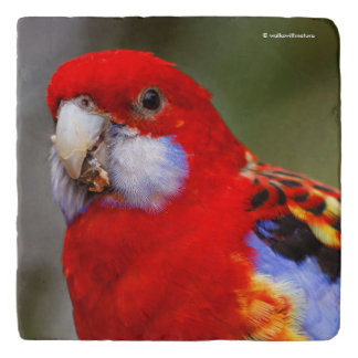 A Cheeky and Colorful Eastern Rosella Trivet