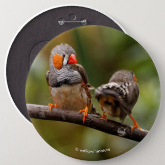 A Cheeky Pair of Zebra Finches 6 Inch Round Button