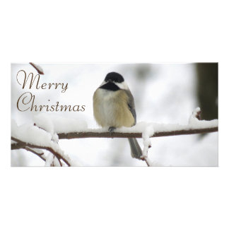 A Chickadee Christmas Card