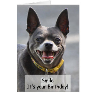 A Chihuahua Birthday Card