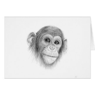 A Chimpanzee, Not Monkeying Around Sketch Card
