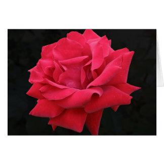 A Classic Red Rose Card