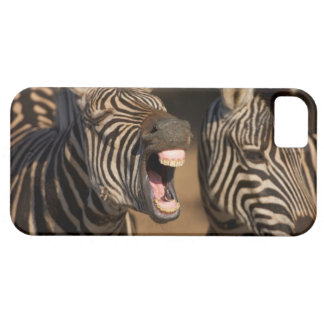 A close-up of a Zebra showing its teeth, iPhone 5 Case