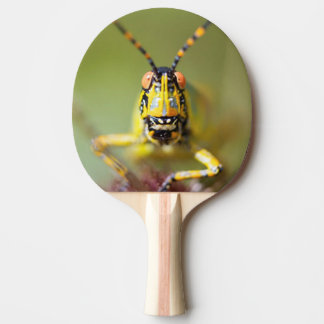 A close-up of an Elegant Grasshopper Ping-Pong Paddle