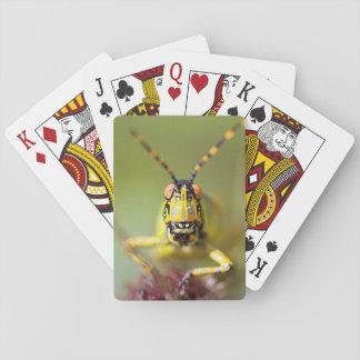 A close-up of an Elegant Grasshopper Poker Cards