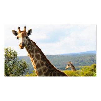 A close up photo of a male Giraffe on Safari Business Card