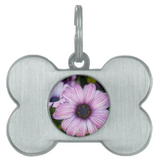A close view of  a kind of daisy, Bodrum daisy Pet Tags