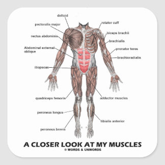 A Closer Look At My Muscles (Anatomy / Anatomical) Square Sticker