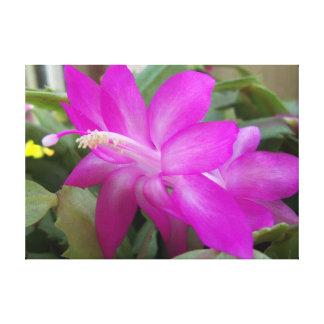 A closeup of a bright fuchsia pink cactus flower canvas print