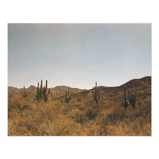 A Cluster of Cacti Photographic Print