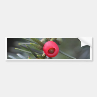 A cone of a yew (Taxus baccata) Bumper Sticker