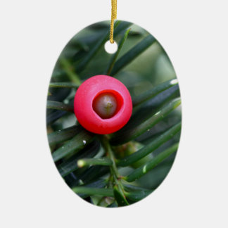 A cone of a yew (Taxus baccata) Ceramic Oval Ornament