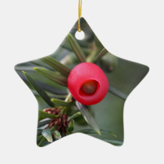 A cone of a yew (Taxus baccata) Ceramic Star Ornament