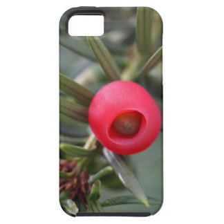 A cone of a yew (Taxus baccata) iPhone 5 Cover