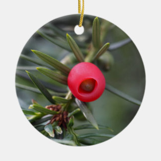 A cone of a yew (Taxus baccata) Round Ceramic Ornament
