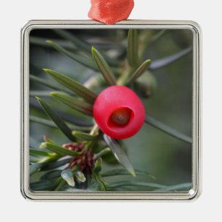 A cone of a yew (Taxus baccata) Silver-Colored Square Ornament