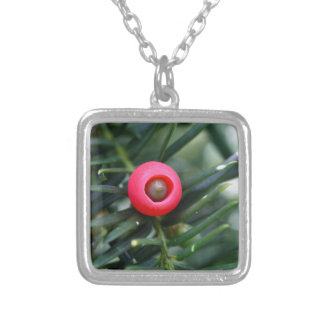 A cone of a yew (Taxus baccata) Silver Plated Necklace