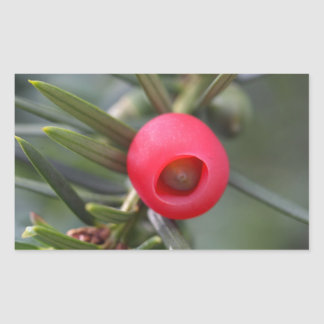 A cone of a yew (Taxus baccata) Sticker