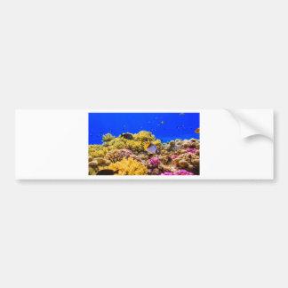 A Coral Reef in the Red Sea near Egypt Bumper Sticker