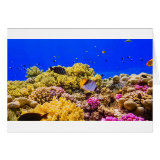 A Coral Reef in the Red Sea near Egypt Card