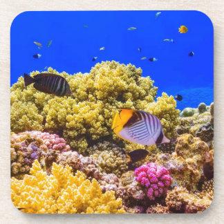 A Coral Reef in the Red Sea near Egypt Coaster