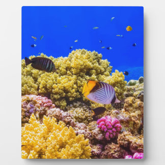 A Coral Reef in the Red Sea near Egypt Plaque