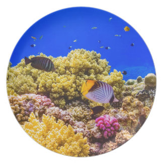 A Coral Reef in the Red Sea near Egypt Plate