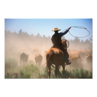 A cowboy out working the herd on a cattle art photo