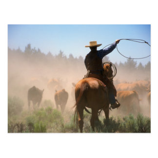 A cowboy out working the herd on a cattle postcard