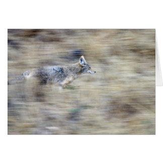 A coyote runs through the hillside blending into card