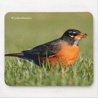 A Curious American Robin Mouse Pad