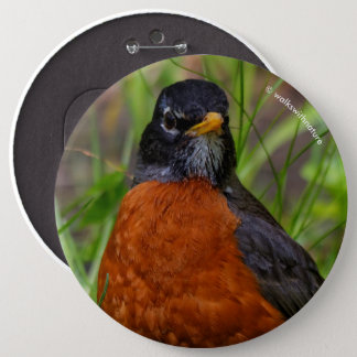 A Curious and Hopeful American Robin 6 Inch Round Button