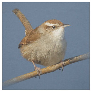 A Curious Bewick's Wren in the Tree Fabric