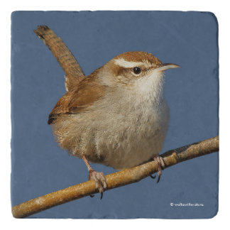 A Curious Bewick's Wren in the Tree Trivet