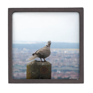 A curious collared dove on top of the world premium jewelry boxes