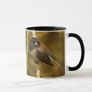 A Curious Dark-Eyed Junco Mug