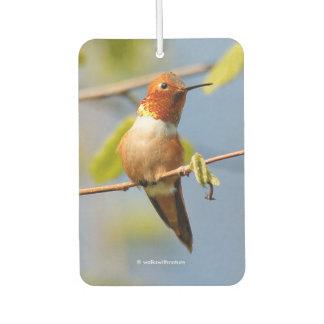 A Curious Rufous Hummingbird Air Freshener