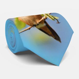 A Curious Rufous Hummingbird Tie