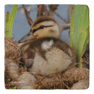 A Cute and Precocious Mallard Duckling Trivet