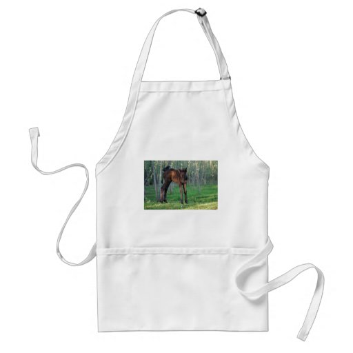 A cute baby foal aprons