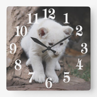 A cute baby white lion square wall clock
