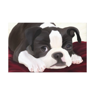 A cute little Boston terrier digitally handpainted Canvas Print