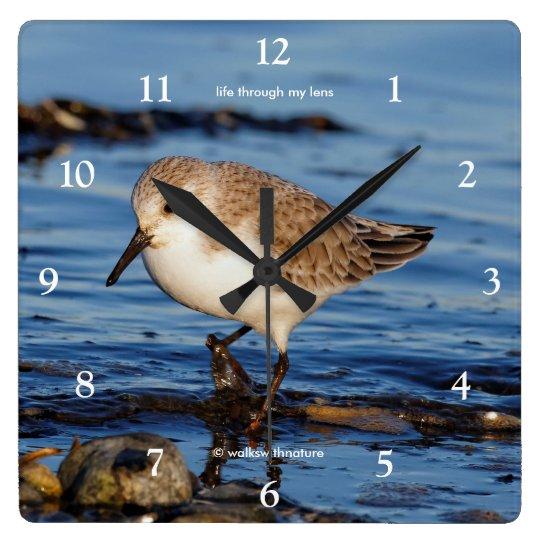 A Cute Little Wandering Sanderling Clocks