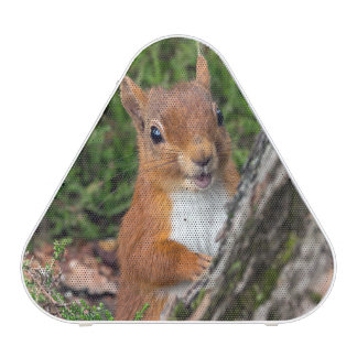 A cute red squirrel blueooth speaker