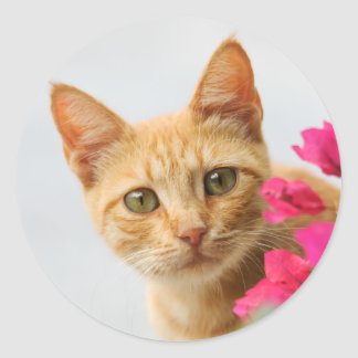 A cute red tabby kitten is watching you. round sticker