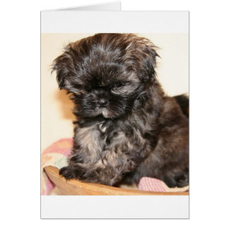 A Cute Shih Tzu Pup makes this product adorable Card