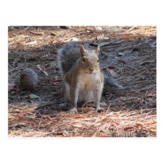 A cute Squirrel Postcard