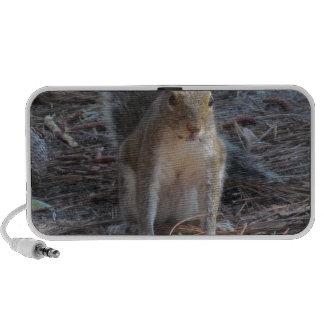 A cute Squirrel iPhone Speakers