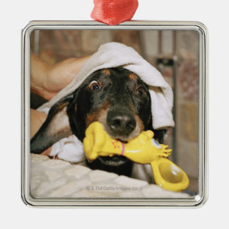 A dachshund being bathed. Silver-Colored square ornament